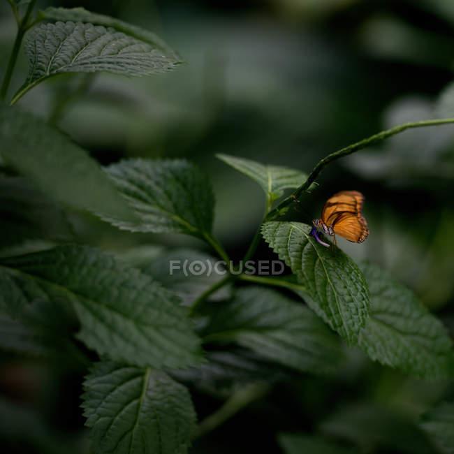 Folhas da planta e a borboleta — Fotografia de Stock