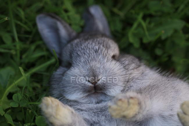 Mignon lapin sur l'herbe — Photo de stock