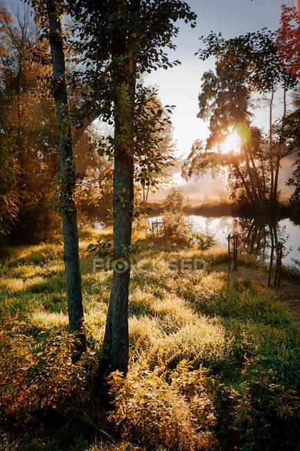 Prado de grama verde na floresta com árvores e raios solares — Fotografia de Stock