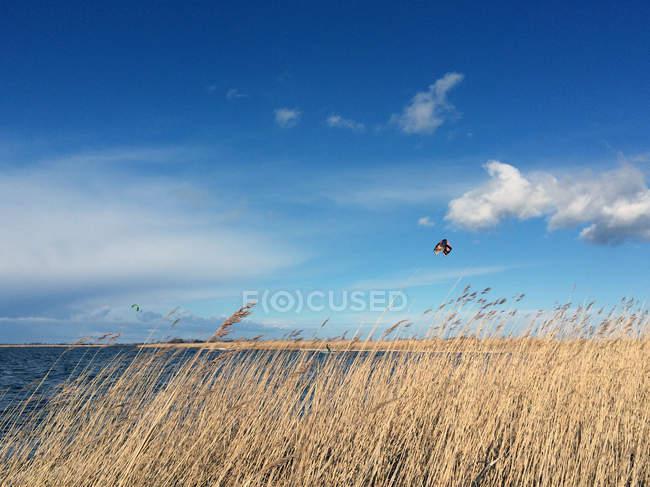 Kitesurfen an der Meeresküste bei sonnigem Wetter — Stockfoto