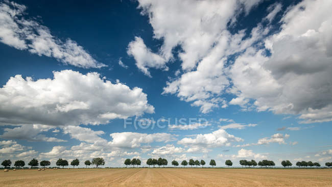Field view with trees and cloudy sky — Stock Photo