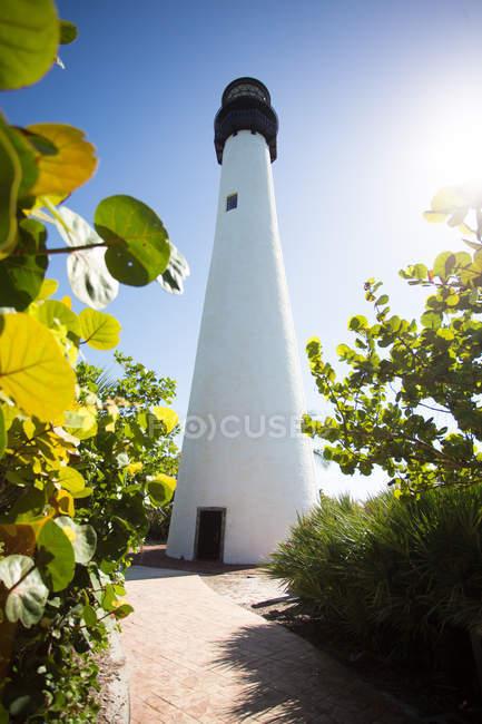 Растения и видом на маяк в солнце — стоковое фото