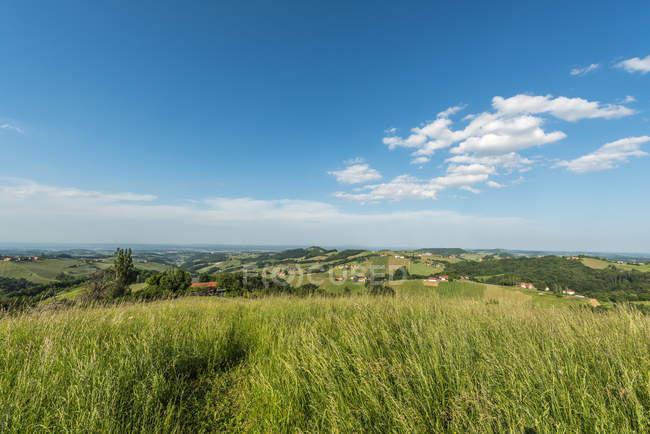 Campo di erba sulle colline nel sole — Foto stock