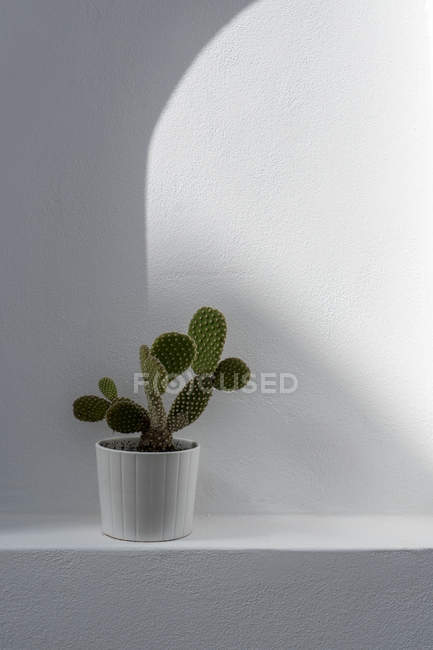 Green prickly cactus in white pot — Stock Photo