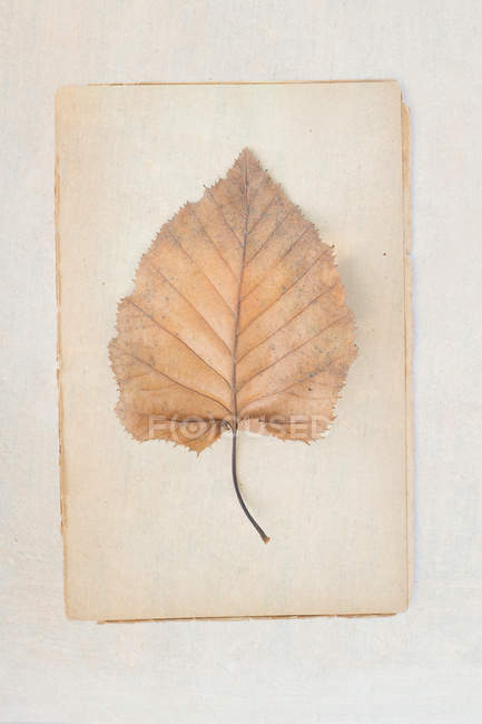 Plant leaf on paper sheet — Stock Photo