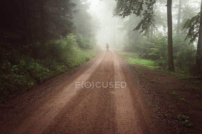 Footpat through forest view — Stock Photo