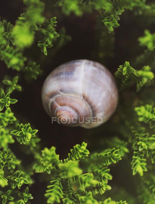 Vista delle coperture della lumaca in muschio — Foto stock