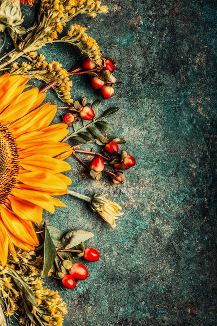 Draufsicht der Sonnenblumen unter dem Motto Design auf dunklem Hintergrund — Stockfoto