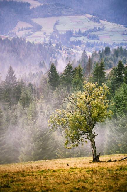 Herbst Nebel Karpaten-Berg-Szene — Stockfoto