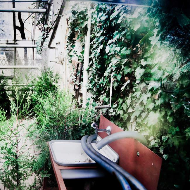 Topfpflanzen und Arbeitshilfen im Gewächshaus — Stockfoto