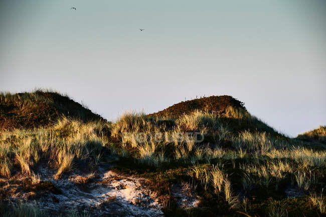 Sandy coastline with marram grass at Sylt island, Germany — Stock Photo