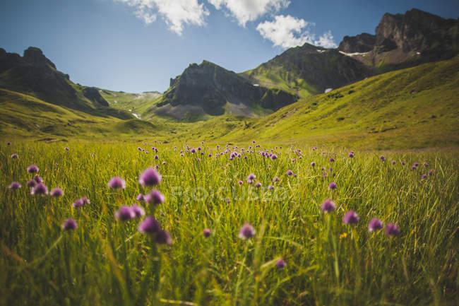 Landschaft der Berge im Sommer — Stockfoto