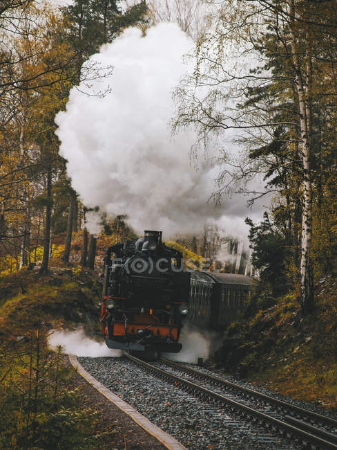 Steam locomotive passing through forest landscape, front view — Stock Photo