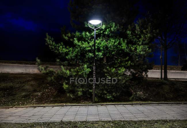Illuminated street light against trees at night. — Stock Photo