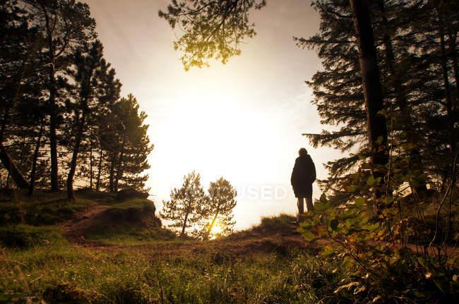 Vista posterior de una persona caminando en el bosque rodeado de naturaleza bajo el cielo del atardecer - foto de stock