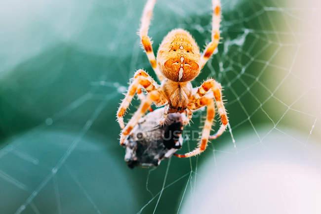 Close-up tiro de uma aranha em uma teia — Fotografia de Stock
