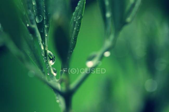 Close up of green leafy plant with rain drops — Stock Photo