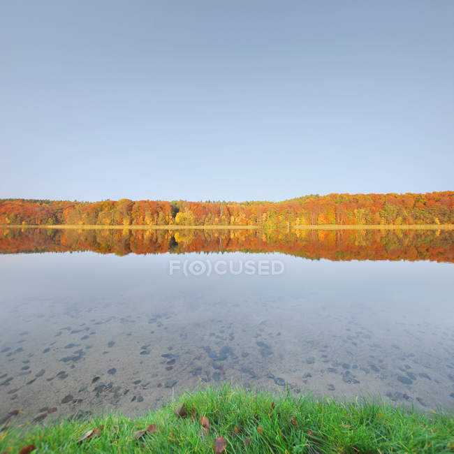 Tranquil scene of colorful autumn trees reflecting in lake in Germany forest - foto de stock