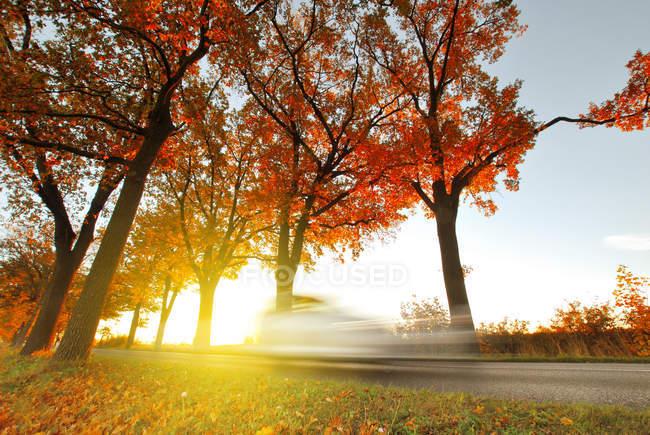 Апельсиновые деревья в парке в солнечный осенний день — стоковое фото