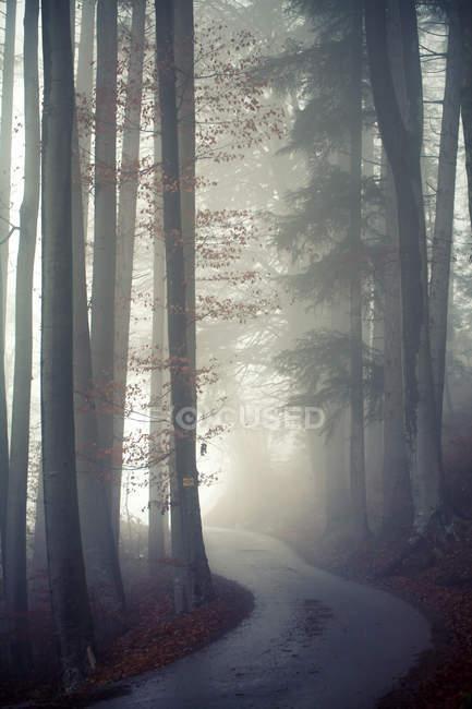 Árvores na floresta durante nevoeiro — Fotografia de Stock