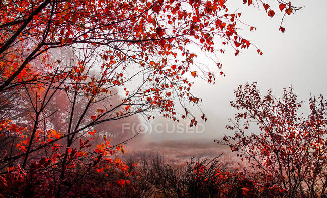 Scenic view of red foliage in the autumn mist — Stock Photo