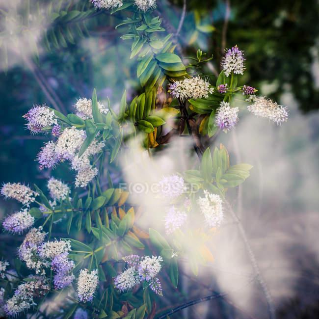 Fresh purple flowering plants — Stock Photo