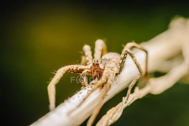 Primo piano sparato di un ragno a fuoco selettivo — Foto stock