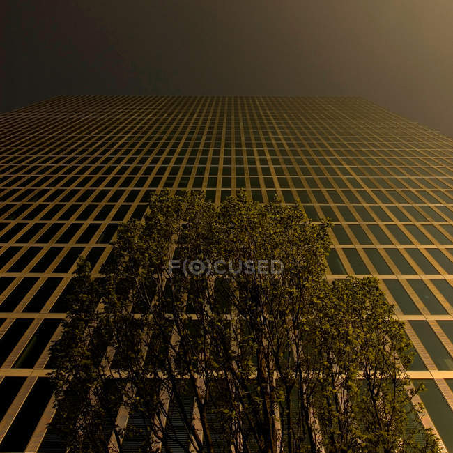 Low angle view on skyscraper house and tree at night — Stock Photo
