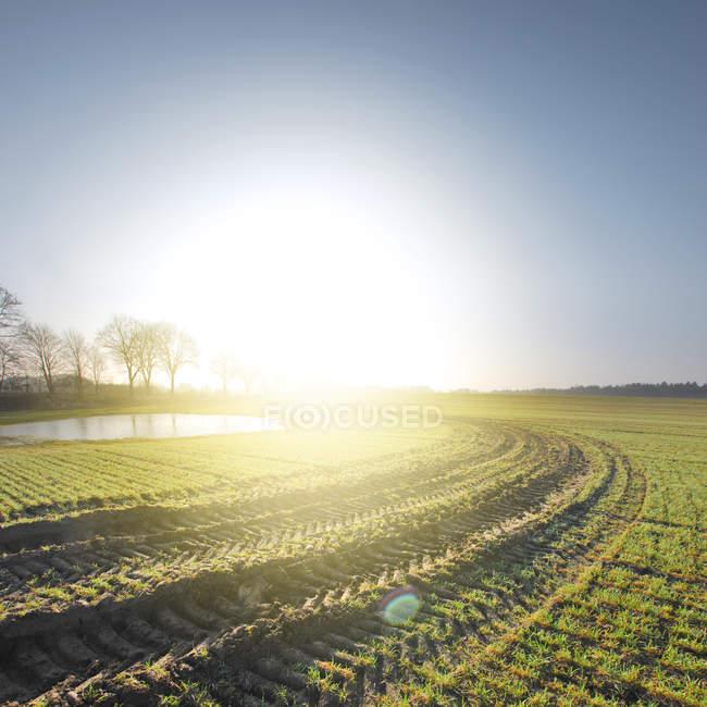 Malerische Landschaft des einen landwirtschaftlichen Bereich unter sonnigem Himmel — Stockfoto