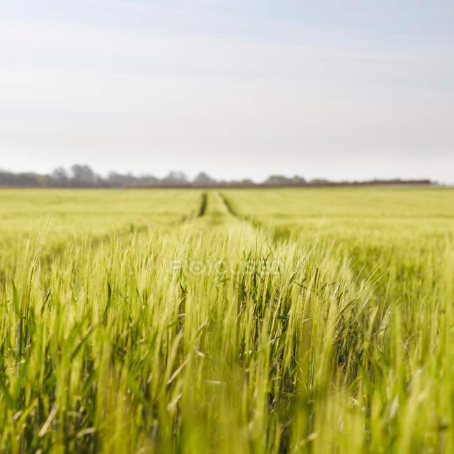 Vista panoramica di un campo agricolo rurale in una giornata di sole — Foto stock