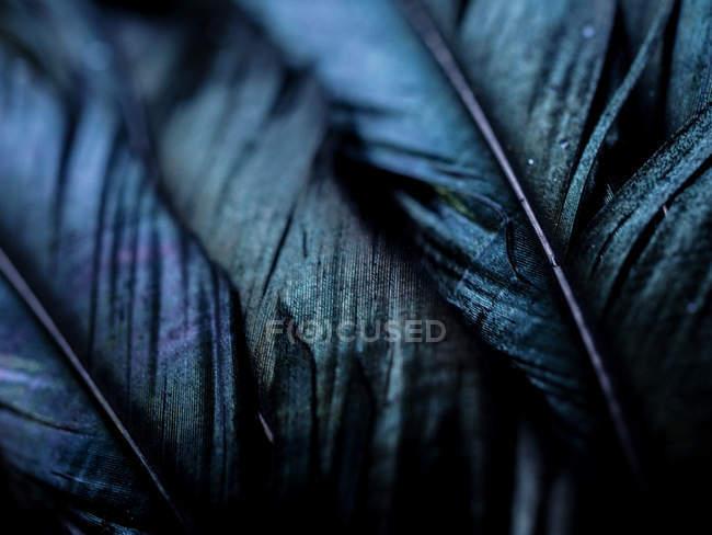 Подробные выстрел перьев в выборочный фокус — стоковое фото