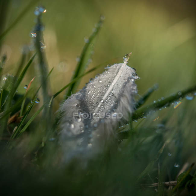 Close up of green grass and wet feather in selective focus — стоковое фото