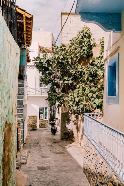 Тихий алея з деревом денний час — стокове фото
