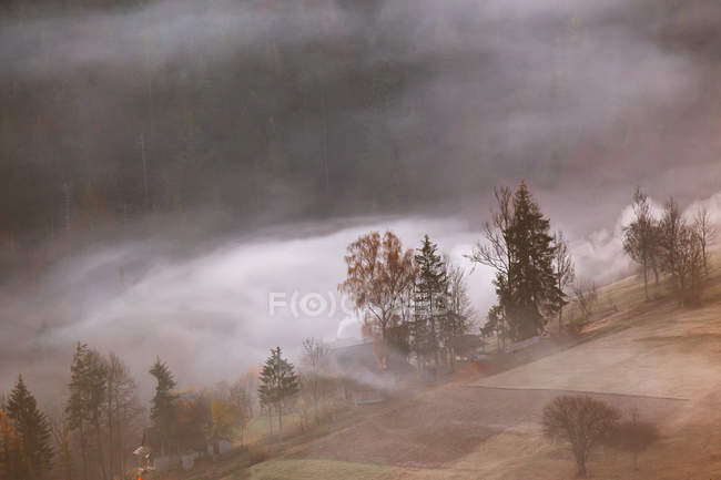 Foggy weather on hills with trees — Stock Photo