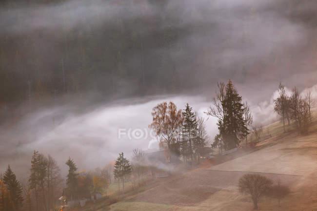 Nevoeiro em colinas com árvores — Fotografia de Stock