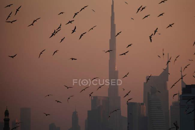 A flock of birds flying against an orange sky in Dubai — Stock Photo