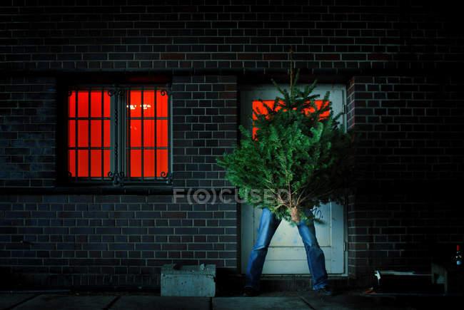 Man taking a Christmas tree inside the house — Stock Photo
