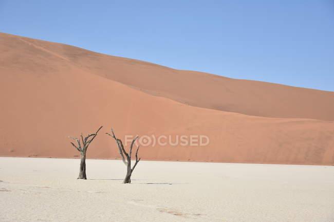 Dunas de arena en el desierto y dos árboles secos - foto de stock
