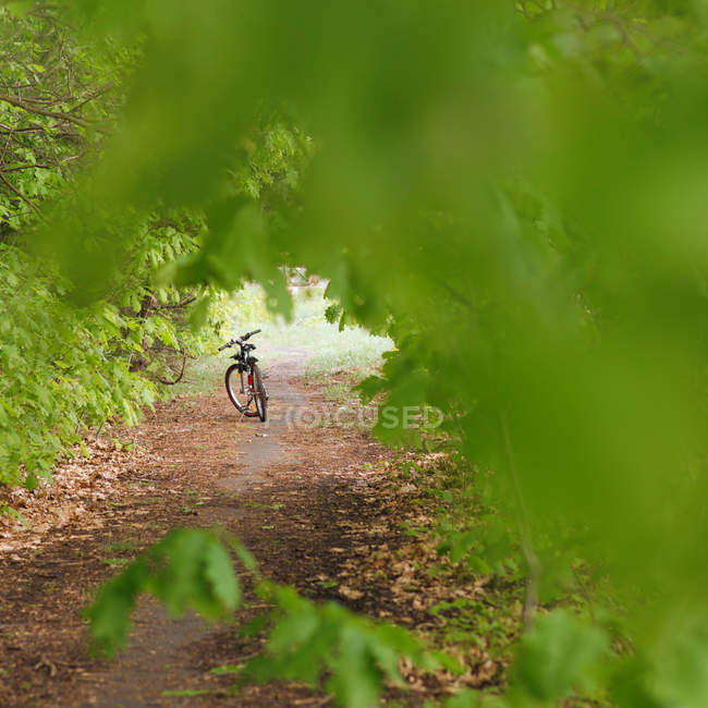Hidden view of a bicycle parked in a field surrounded by greenery — Stock Photo