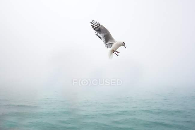 Seagull flying mid air over the sea in Venice — Stock Photo