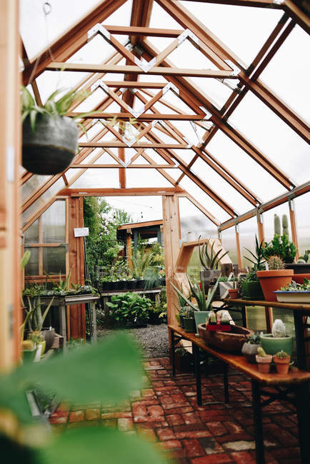 Potted plants in greenhouse — Stockfoto