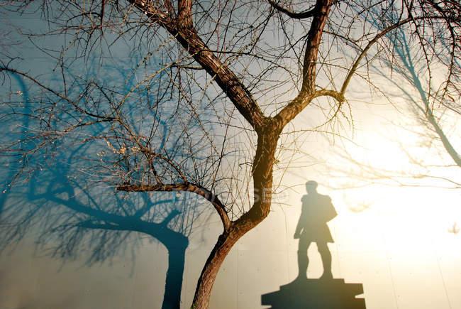Juego de la sombra de un árbol desnudo y una estatua — punto