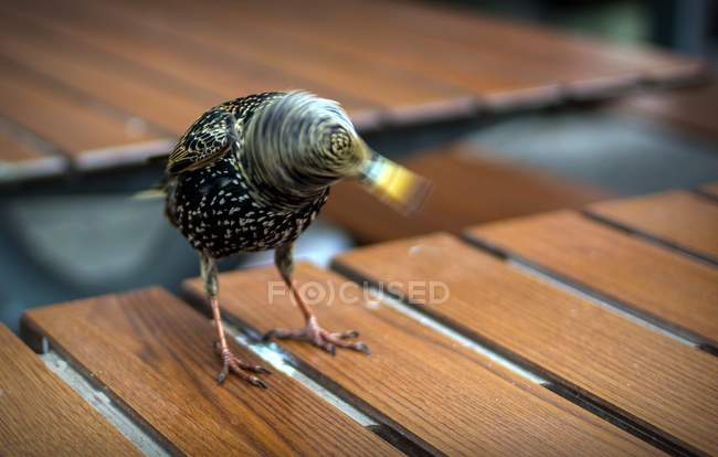 Close-up blurred motion shot of a bird perching on a wooden table — Stock Photo