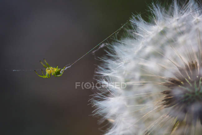 A tiny spider on its fragile web — Stock Photo