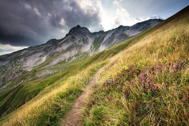 Flores de Heather e caminho nas montanhas, Bavaria, Alps — Fotografia de Stock