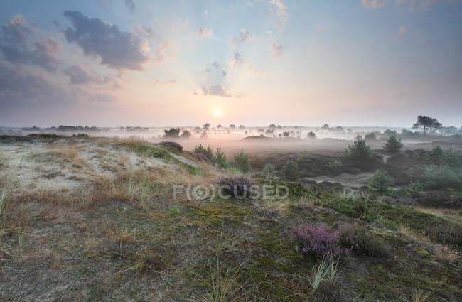 Landschaftlich reizvolle Naturlandschaft der nebligen Gebiet unter sonnigem Himmel in Niederlande — Stockfoto
