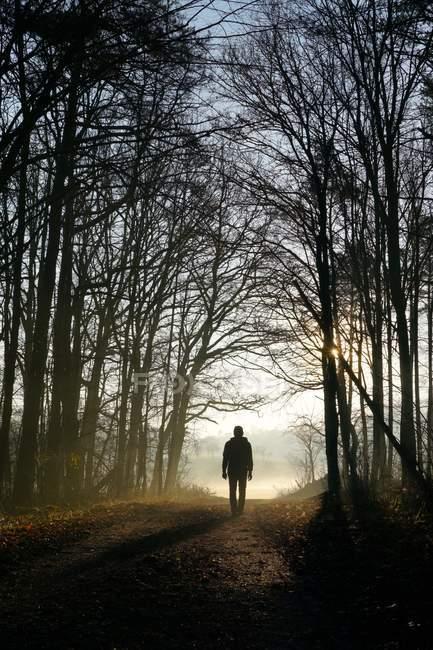 Silhouette vue arrière d'un homme marchant dans la nature dans une forêt — Photo de stock