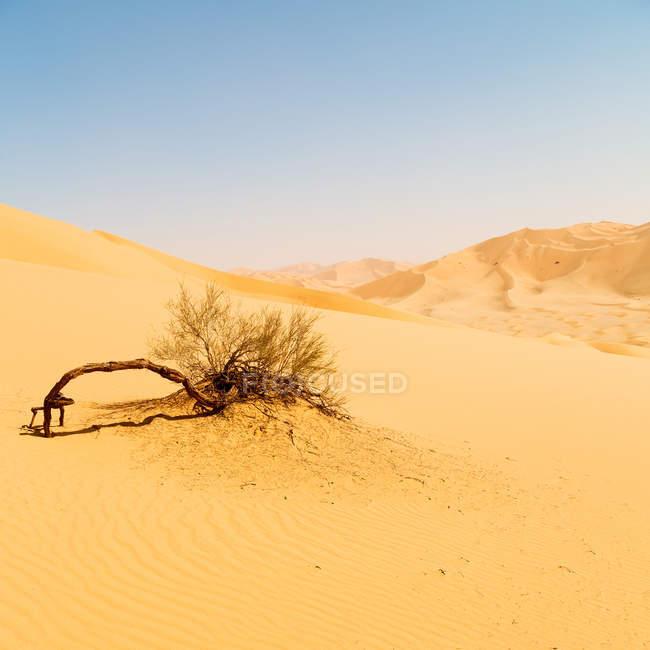 Superbe coup de dunes de sable dans le désert en Afrique — Photo de stock