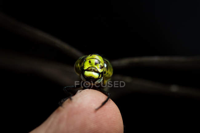 Close-up shot of a human hand holding a small insect — Stock Photo
