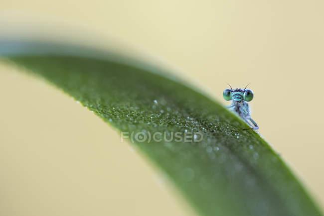 Закри комаха на мокрій траві — стокове фото